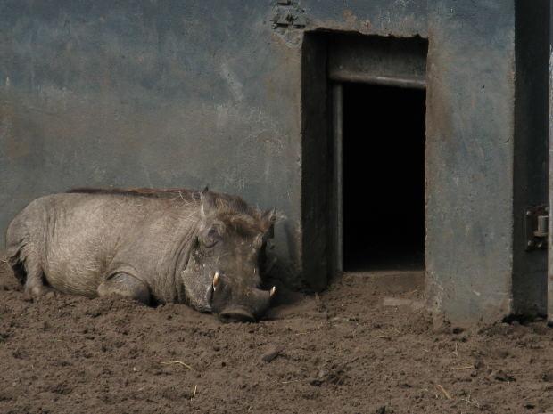 El tratamiento a los animales en España