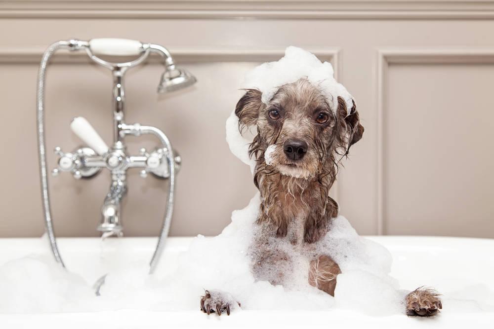 Los mejores consejos para dejar a tu perro feliz durante tus vacaciones