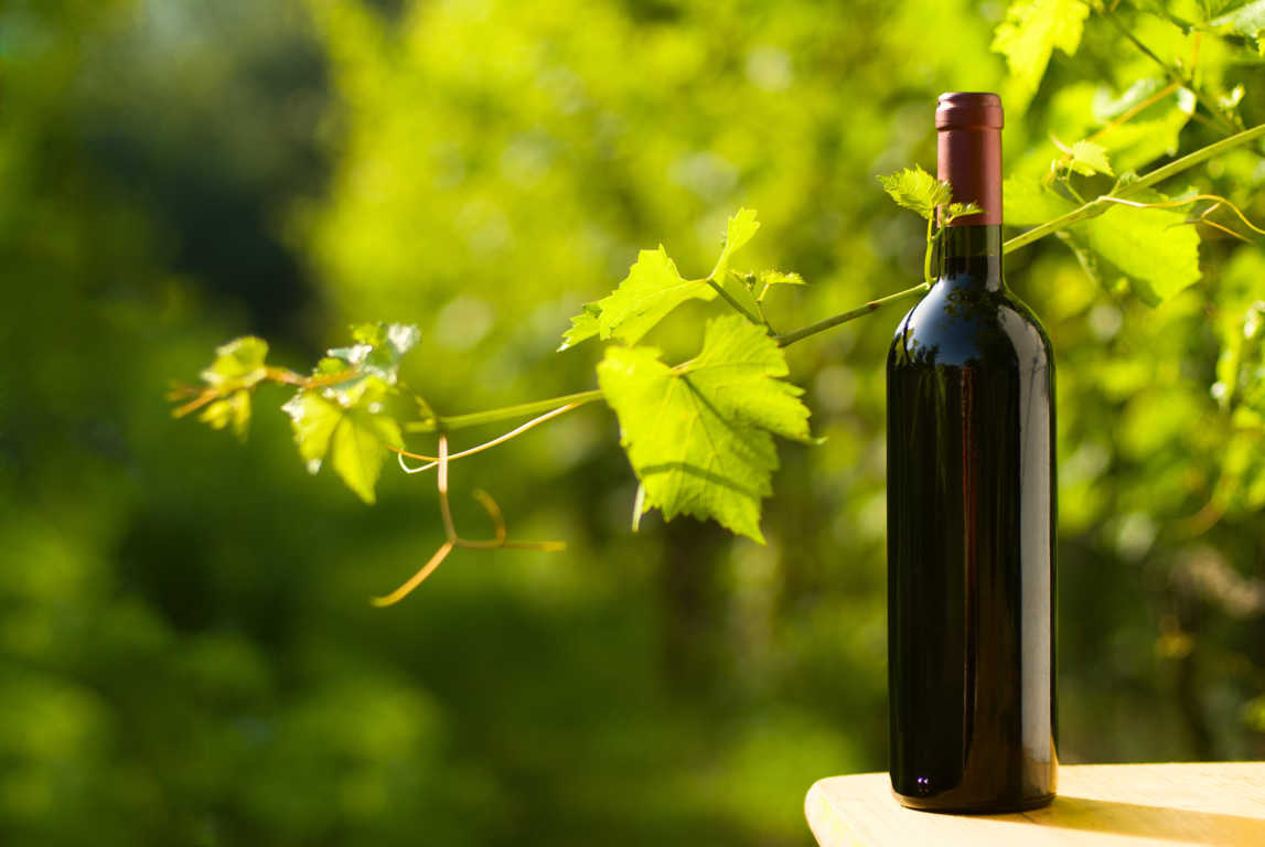 El vino ecológico está de moda